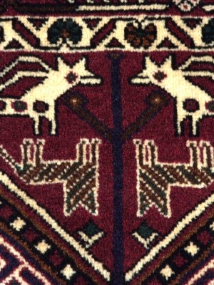 Share Babak persiano cm 183×135
